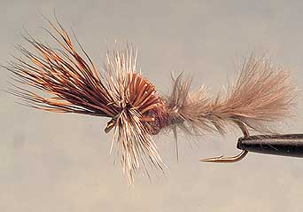 Frying Pan Flashback trout fly pattern